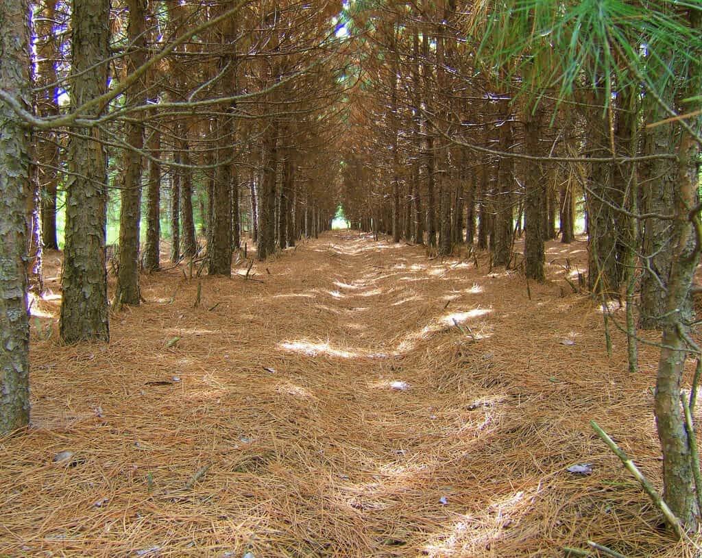 game-trail