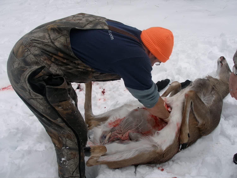 field dress a deer